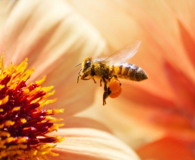 ふだん食べているハチミツには、壮大なドラマがありました。大切に食べないといけません