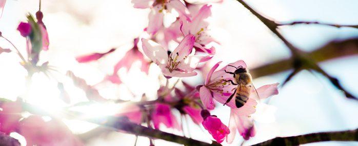 銀座で養蜂!年1トンのハチミツを収穫する銀座ミツバチプロジェクトから見る街の魅力